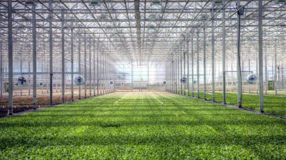 خصوصیات ساخت گلخانه