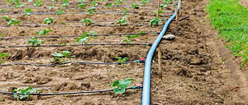 تجهیزات آبیاری قطره ای گلخانه